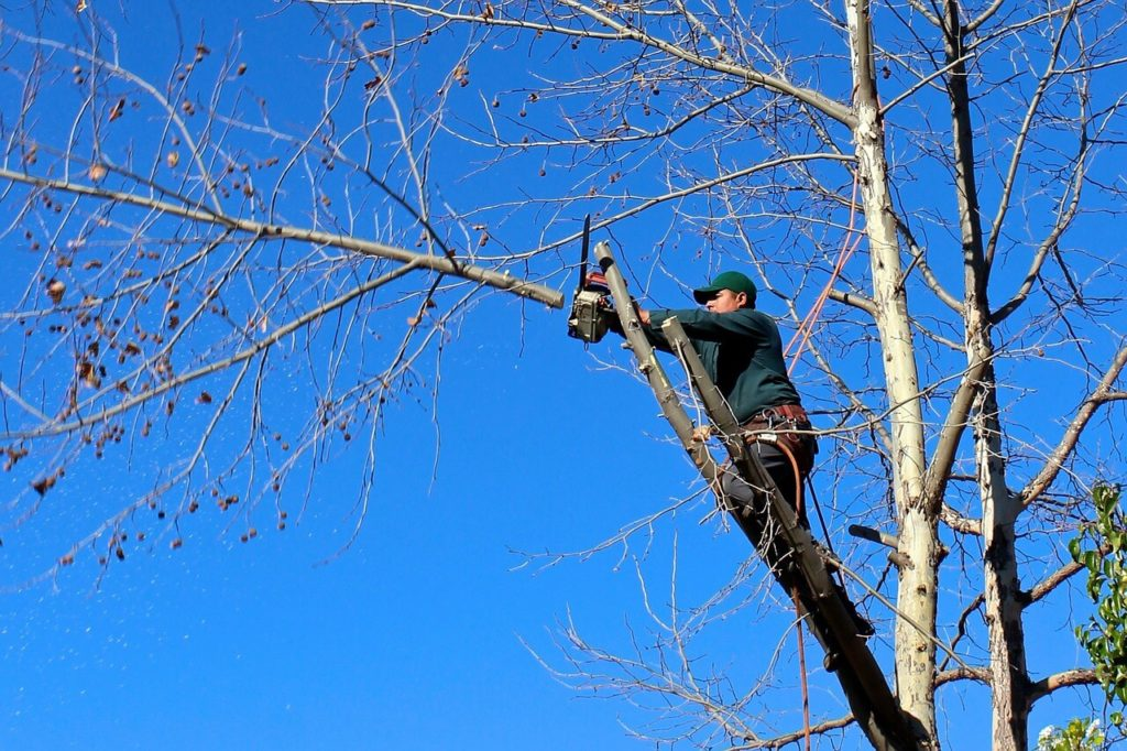 Contact Us-Kendall FL Tree Trimming and Stump Grinding Services-We Offer Tree Trimming Services, Tree Removal, Tree Pruning, Tree Cutting, Residential and Commercial Tree Trimming Services, Storm Damage, Emergency Tree Removal, Land Clearing, Tree Companies, Tree Care Service, Stump Grinding, and we're the Best Tree Trimming Company Near You Guaranteed!