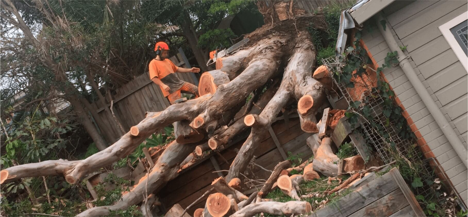 Kendall FL Tree Trimming and Stump Grinding Services Home Page-We Offer Tree Trimming Services, Tree Removal, Tree Pruning, Tree Cutting, Residential and Commercial Tree Trimming Services, Storm Damage, Emergency Tree Removal, Land Clearing, Tree Companies, Tree Care Service, Stump Grinding, and we're the Best Tree Trimming Company Near You Guaranteed!