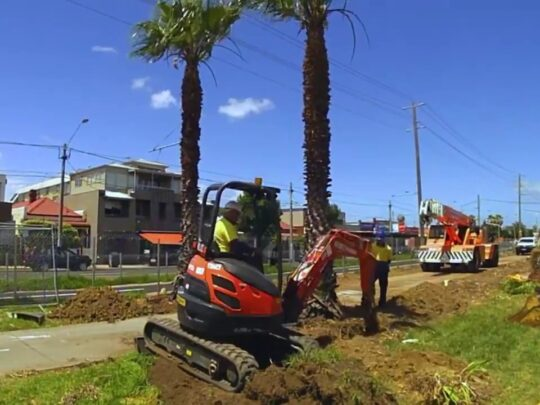 Palm Tree Removal-Kendall FL Tree Trimming and Stump Grinding Services-We Offer Tree Trimming Services, Tree Removal, Tree Pruning, Tree Cutting, Residential and Commercial Tree Trimming Services, Storm Damage, Emergency Tree Removal, Land Clearing, Tree Companies, Tree Care Service, Stump Grinding, and we're the Best Tree Trimming Company Near You Guaranteed!
