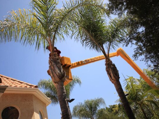 Palm Tree Trimming-Kendall FL Tree Trimming and Stump Grinding Services-We Offer Tree Trimming Services, Tree Removal, Tree Pruning, Tree Cutting, Residential and Commercial Tree Trimming Services, Storm Damage, Emergency Tree Removal, Land Clearing, Tree Companies, Tree Care Service, Stump Grinding, and we're the Best Tree Trimming Company Near You Guaranteed!
