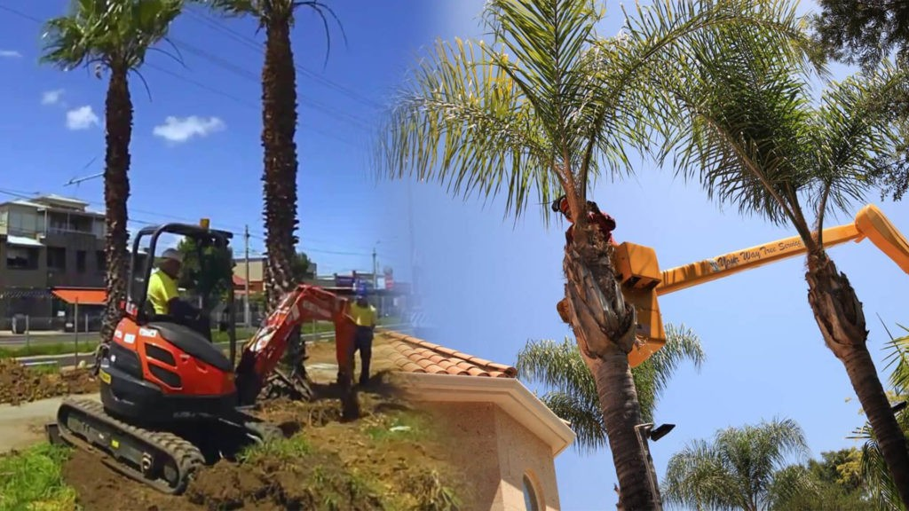 Palm tree trimming & palm tree removal-Kendall FL Tree Trimming and Stump Grinding Services-We Offer Tree Trimming Services, Tree Removal, Tree Pruning, Tree Cutting, Residential and Commercial Tree Trimming Services, Storm Damage, Emergency Tree Removal, Land Clearing, Tree Companies, Tree Care Service, Stump Grinding, and we're the Best Tree Trimming Company Near You Guaranteed!