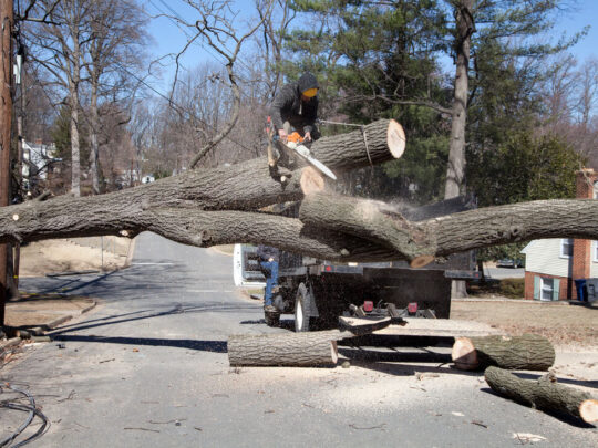 Residential Tree Services-Kendall FL Tree Trimming and Stump Grinding Services-We Offer Tree Trimming Services, Tree Removal, Tree Pruning, Tree Cutting, Residential and Commercial Tree Trimming Services, Storm Damage, Emergency Tree Removal, Land Clearing, Tree Companies, Tree Care Service, Stump Grinding, and we're the Best Tree Trimming Company Near You Guaranteed!