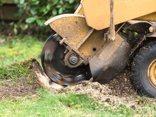 Stump Grinding-Kendall FL Tree Trimming and Stump Grinding Services-We Offer Tree Trimming Services, Tree Removal, Tree Pruning, Tree Cutting, Residential and Commercial Tree Trimming Services, Storm Damage, Emergency Tree Removal, Land Clearing, Tree Companies, Tree Care Service, Stump Grinding, and we're the Best Tree Trimming Company Near You Guaranteed!