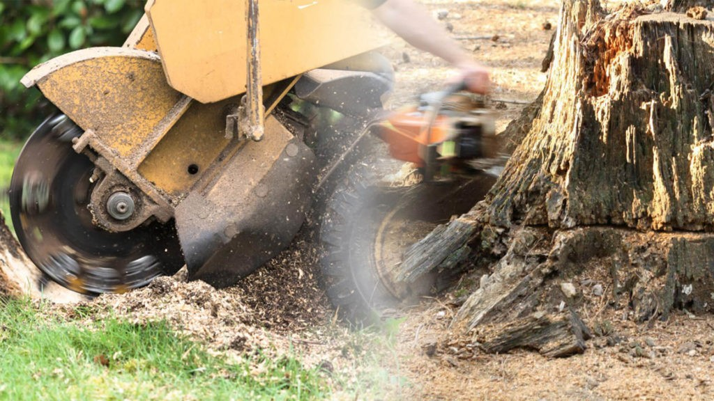 Stump grinding & removal-Kendall FL Tree Trimming and Stump Grinding Services-We Offer Tree Trimming Services, Tree Removal, Tree Pruning, Tree Cutting, Residential and Commercial Tree Trimming Services, Storm Damage, Emergency Tree Removal, Land Clearing, Tree Companies, Tree Care Service, Stump Grinding, and we're the Best Tree Trimming Company Near You Guaranteed!