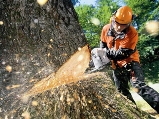 Tree Cutting-Kendall FL Tree Trimming and Stump Grinding Services-We Offer Tree Trimming Services, Tree Removal, Tree Pruning, Tree Cutting, Residential and Commercial Tree Trimming Services, Storm Damage, Emergency Tree Removal, Land Clearing, Tree Companies, Tree Care Service, Stump Grinding, and we're the Best Tree Trimming Company Near You Guaranteed!
