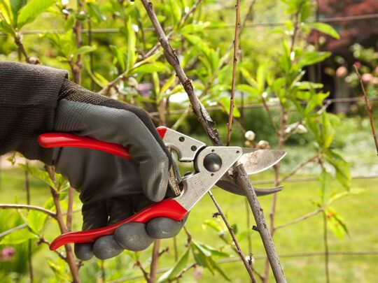Tree Pruning-Kendall FL Tree Trimming and Stump Grinding Services-We Offer Tree Trimming Services, Tree Removal, Tree Pruning, Tree Cutting, Residential and Commercial Tree Trimming Services, Storm Damage, Emergency Tree Removal, Land Clearing, Tree Companies, Tree Care Service, Stump Grinding, and we're the Best Tree Trimming Company Near You Guaranteed!